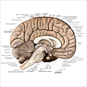 We all fill in the blanks the same way alternate memories human brain schematic ccuart Gallery